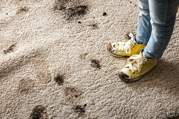 Professional Carpet Stain Removal Service - Colorado Springs